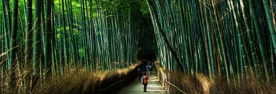 Investir dans les forêts
